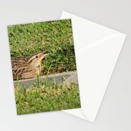 A Young Western Meadowlark Awaits Stationery Cards