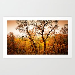Nature Red Art Print