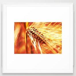 wheatfield Framed Art Print