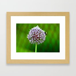 Purple Burst Framed Art Print
