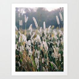 Whimsical Tall Grass Nature Field Landscape Photo Art Print