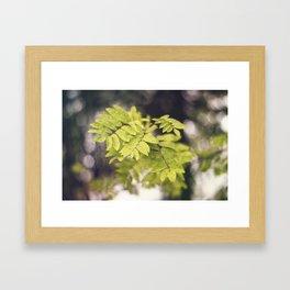 Late Summer Leaves Framed Art Print