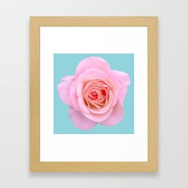 bed of roses: robin's egg blue sky Framed Art Print