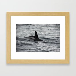 Mystery Beneath the Surface Framed Art Print