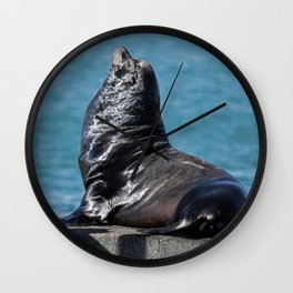 California Sea Lion Wall Clock