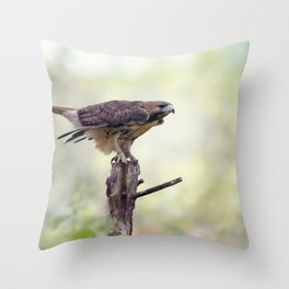 Red-tailed hawk  sitting on a log Throw Pillow