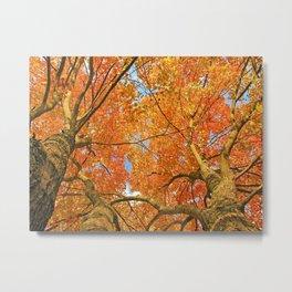Majestic Fall Trees Metal Print