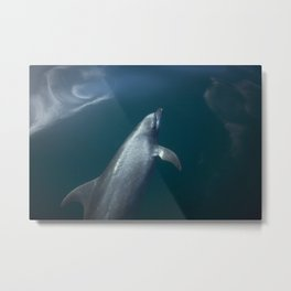 Dolphin and the blue sky Metal Print
