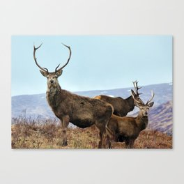 The three Stags Canvas Print