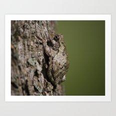 Gray Tree Frog Art Print