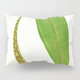 Edward Joseph Lowe - Asplenium Rhizophyllum Pillow Sham