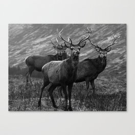 The four stags on the loch b/w Canvas Print