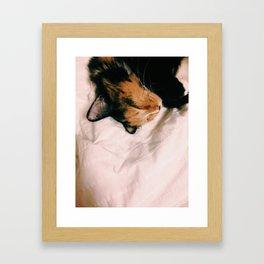 Sleeping Kitty Framed Art Print