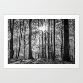 Beech Wood Sunrise Art Print