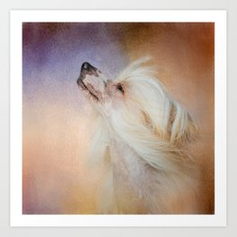 Wind In Her Hair - Chinese Crested Hairless Dog Art Print