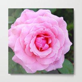 Pink Rose 13 Metal Print