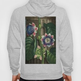 The Quadrangular Passion Flower :  New Illustration Of The Sexual System Hoody