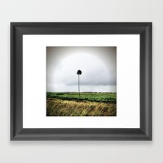 I'm a lonely palm Framed Art Print