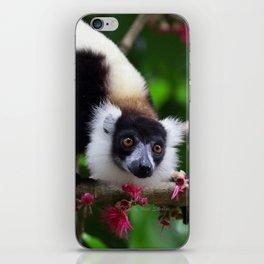 Black and White Ruffed Lemur, Madagascar iPhone Skin