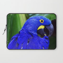 Elegant Hyacinth Macaw Laptop Sleeve