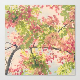 Pink Shower Tree Canvas Print