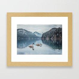 Swans on the Apsee lake, Bavrian alps Framed Art Print