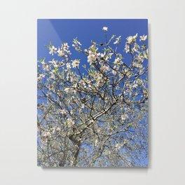 Blossoming Almond Tree Metal Print