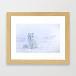 Arctic Fox 2 Framed Art Print