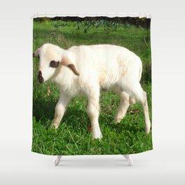 A Newborn Lamb Finding Its Feet Shower Curtain