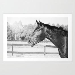 Black & White Stallion Art Print