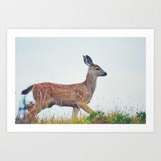 Deer in the Wild Art Print