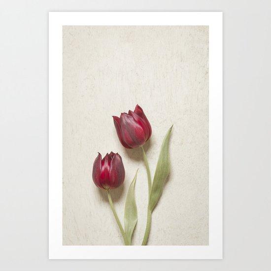 Two Red Tulips II Art Print