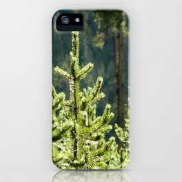 Young Lodgepole Pines after a rain iPhone Case