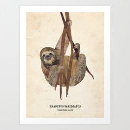 Three Toed Sloth February 2014 Print #1 Art Print