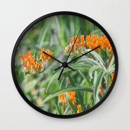 Butterfly Milkweed Wall Clock