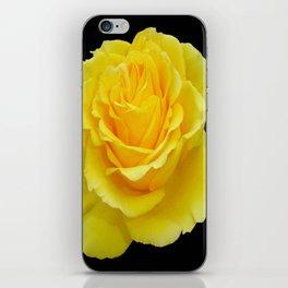 Beautiful Yellow Rose Flower on Black Background iPhone Skin