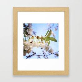 Cherry Blossom & Bee Framed Art Print