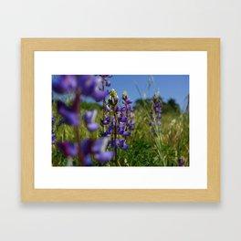 Purple Love in Agoura Hills California Framed Art Print