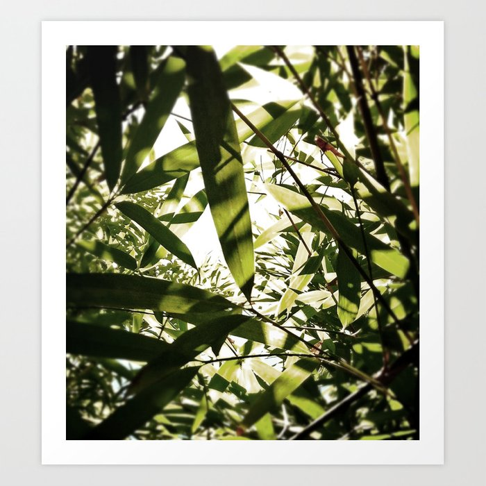 bamboo view Art Print