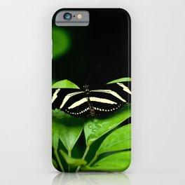 Zebra Longwing Butterfly on green leaves iPhone Case