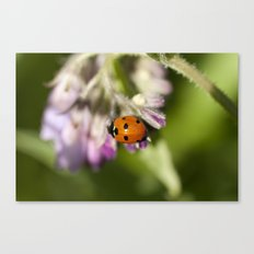 Ladybird in Spring Canvas Print