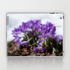 Crocuses in Snow Laptop & iPad Skin
