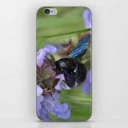 Xylocopa Violacea iPhone Skin