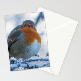 Winter Robin Stationery Cards