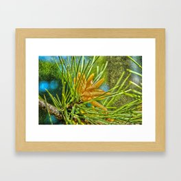 Pollen on the Wing Framed Art Print