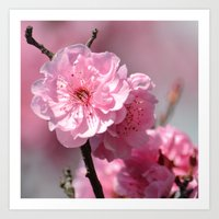 cherry blossoms Art Prints featuring Cherry Blossoms by Zen and Chic