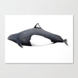 Dall´s porpoise Canvas Print