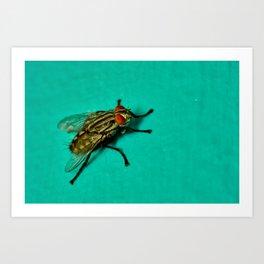 Sticky Wings Art Print