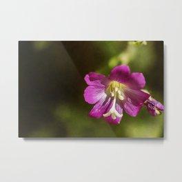 wild flowers #114 Metal Print