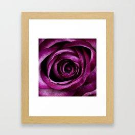 Aubergine Rose Framed Art Print